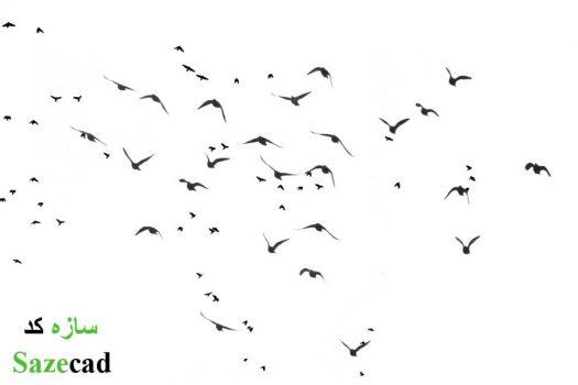 دانلود رایگان تصاویر با کیفیت از پرندگان برای پست پروداکشن
